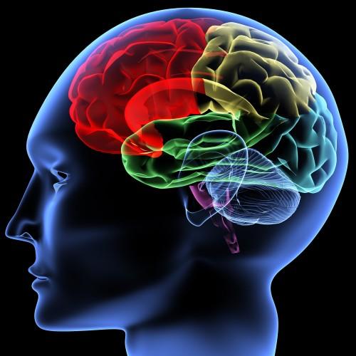 Conférence sur les neurosciences à Lyon